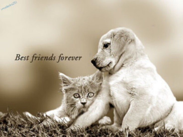 Best-Friends-Forever-Wallpaper-HD-For-Desktop-Background