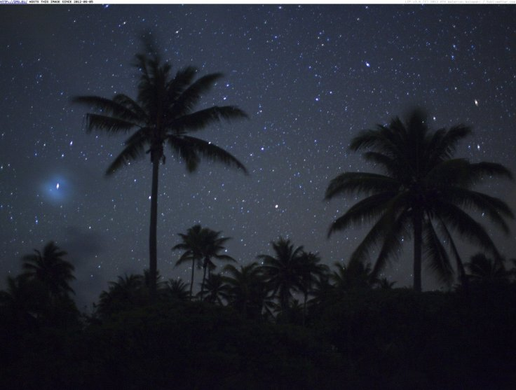 palm-trees-under-starry-skies-french-polynesia