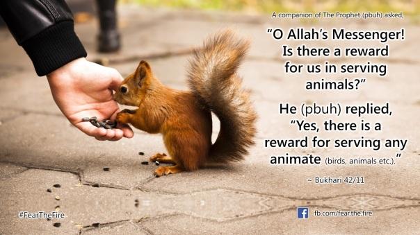 reward in serving animals